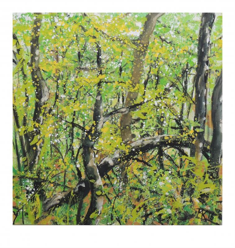 Wald 1 --  MK 662